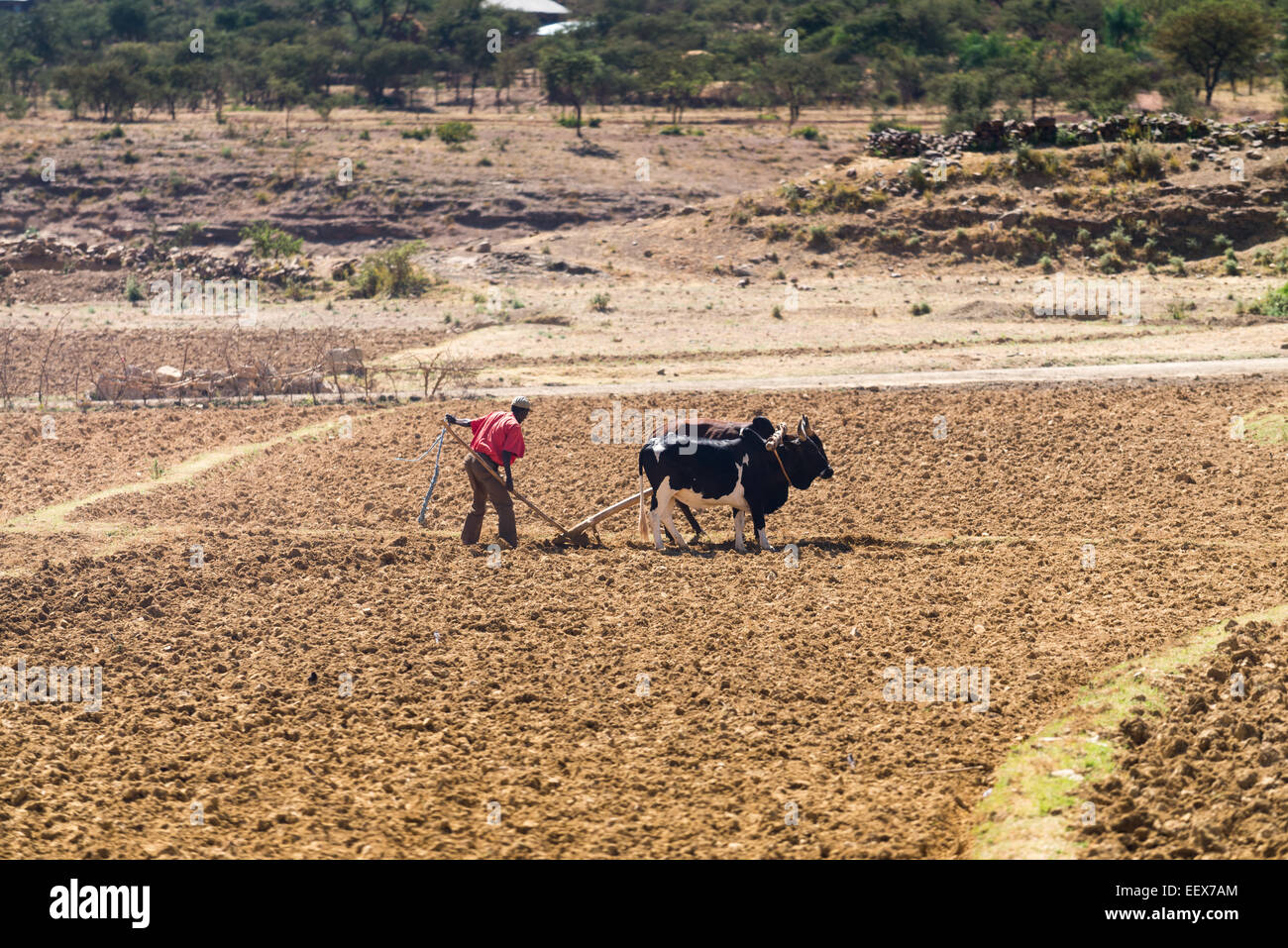 Farmer working his field, Simien Mountains National Park, Ethiopia, Africa - Stock Image