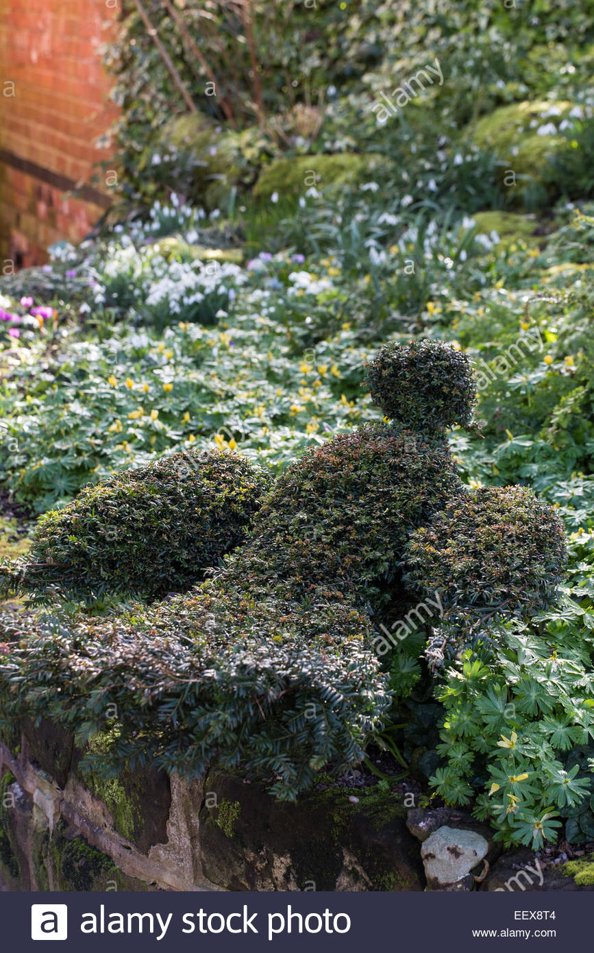 Dial Park, Worcestershire, topiary yew bird - Stock Image