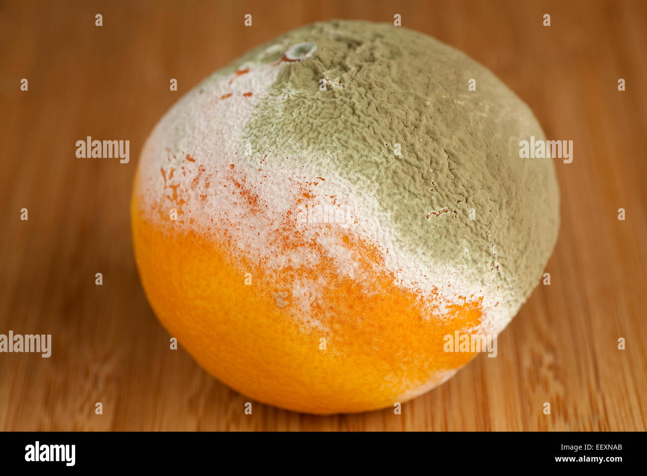 whole rotted mandarin on table in kitchen - Stock Image