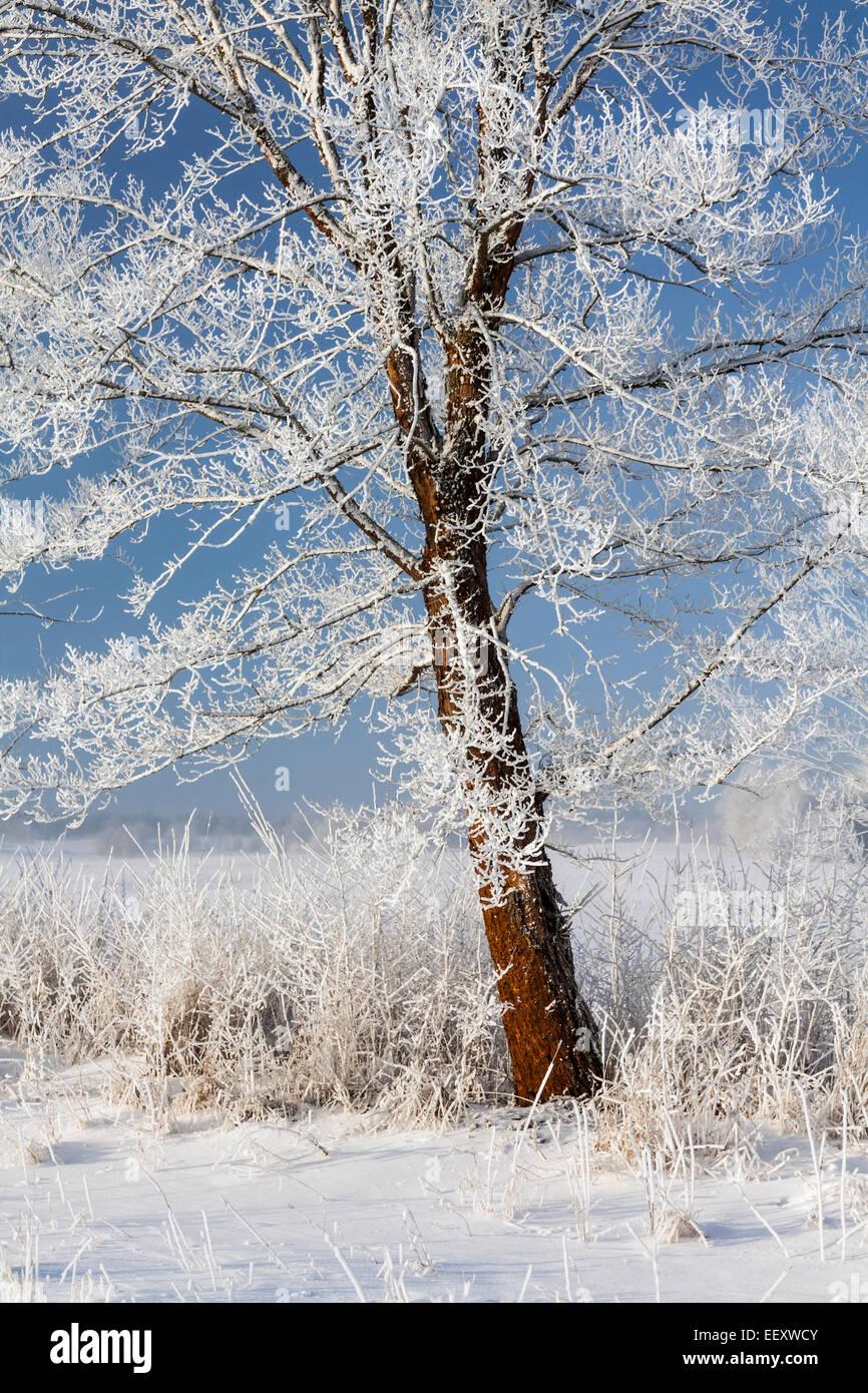 Frosty winter tree, Europe Stock Photo