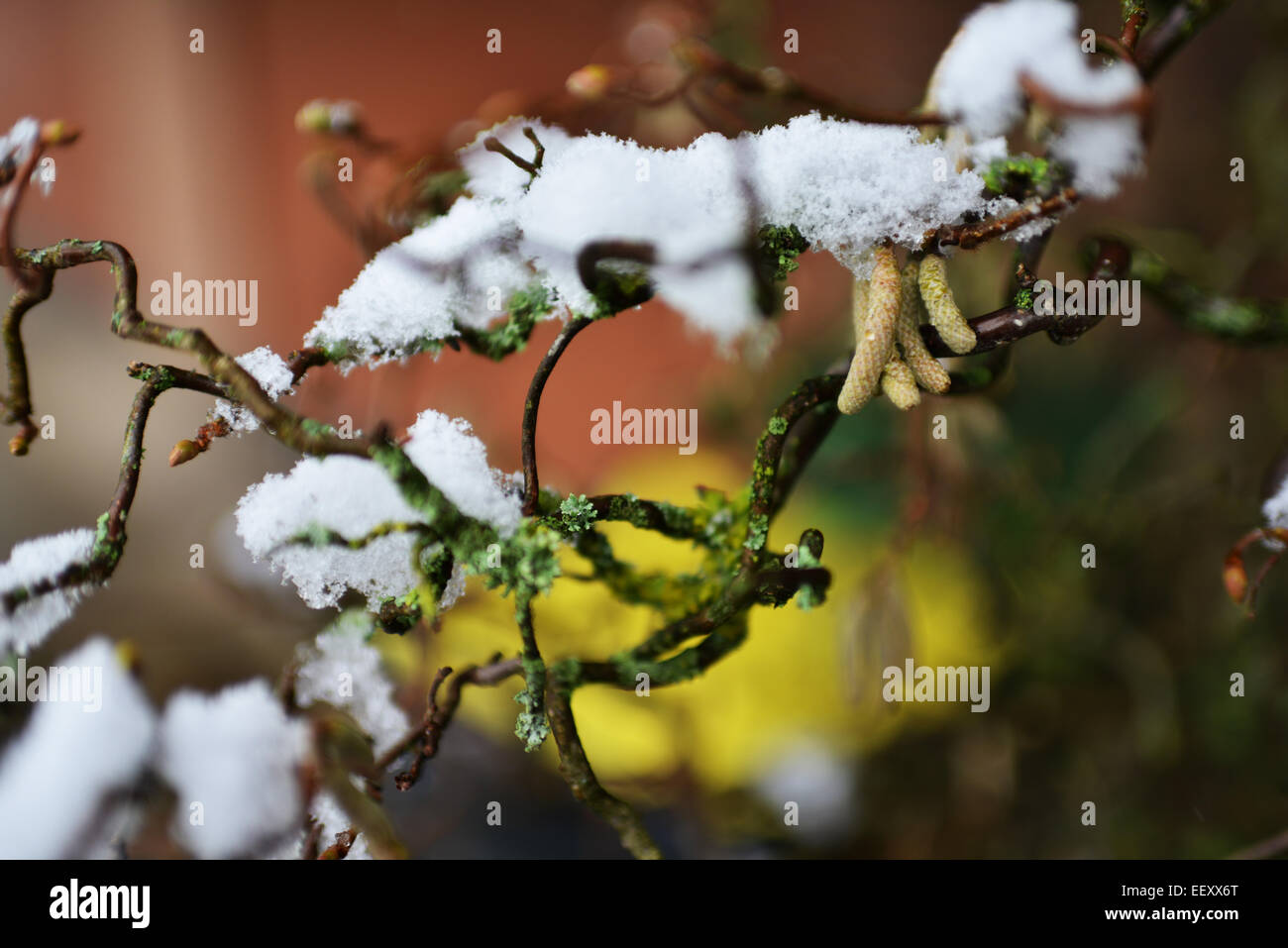 The first snow of winter generates picturesque nature forms in gardens and forests in the Sauerland. Photo: December - Stock Image