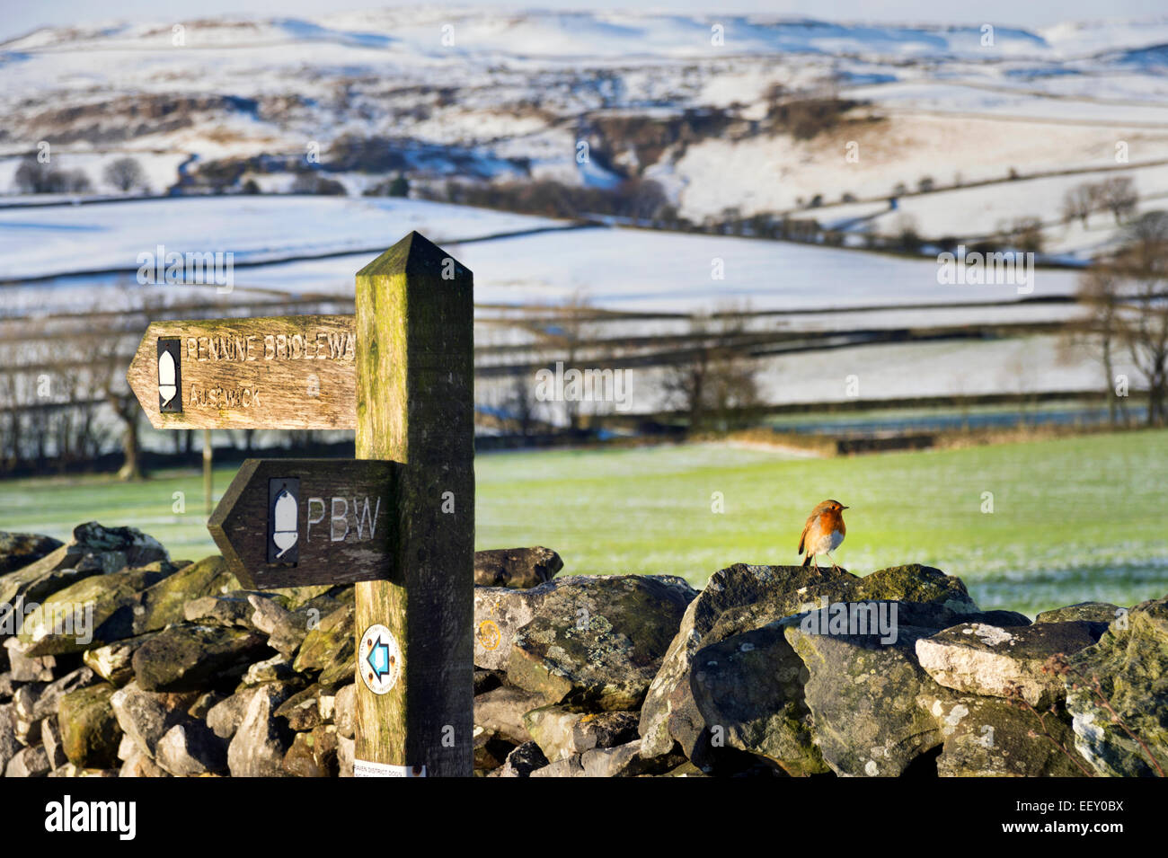 The Pennine Bridleway, with robin on the wall, near Austwick, Yorkshire Dales National Park, North Yorkshire, UK - Stock Image