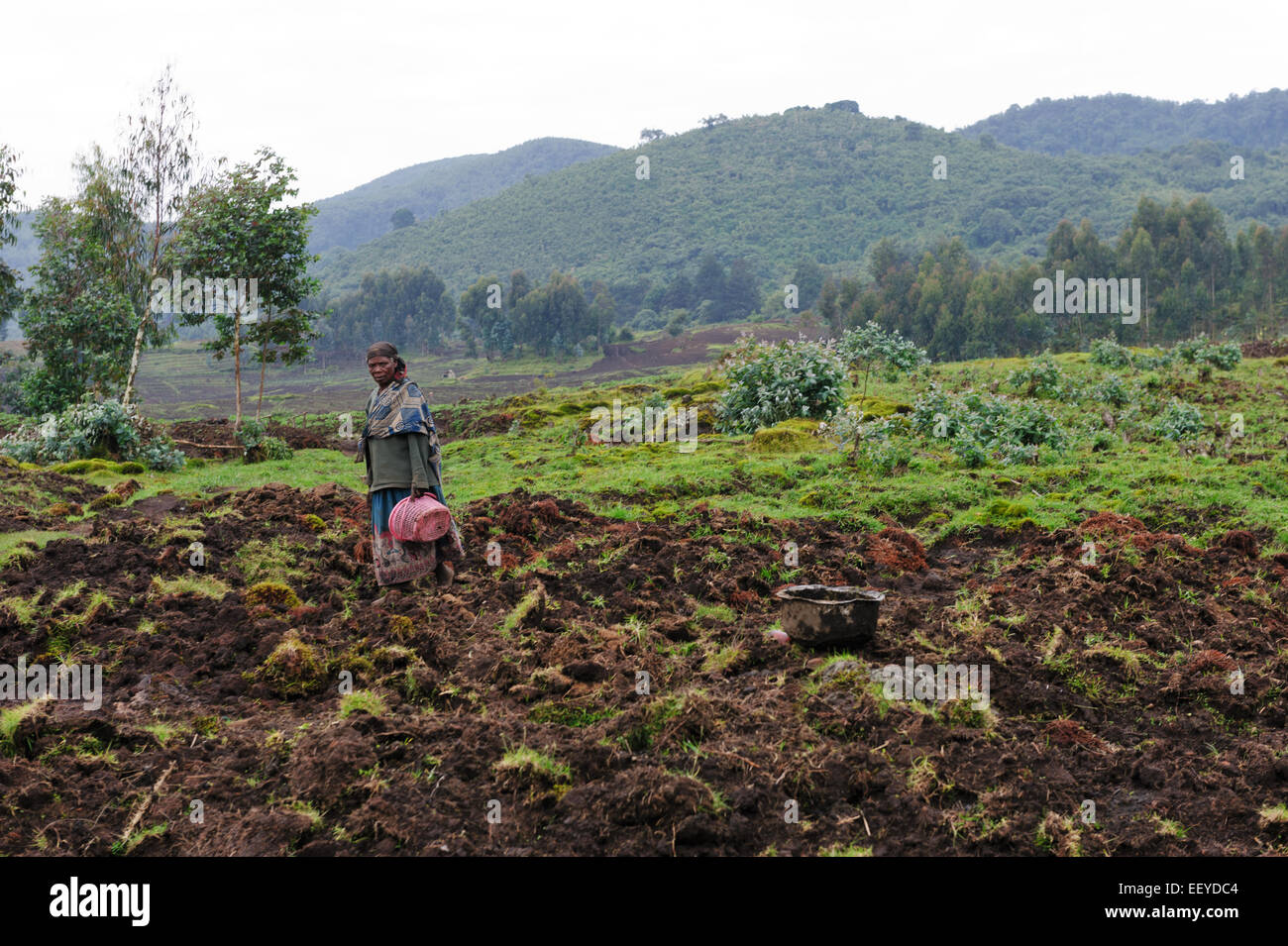 Female farmer on the slopes of Volcanoes National Park. Rwanda - Stock Image