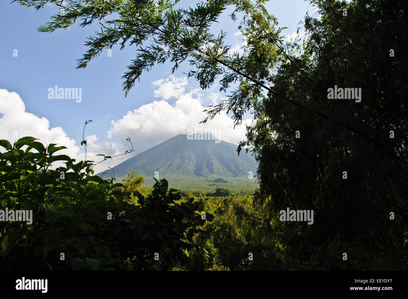 Volcanoes National Park in Kinigi.  Mt. Sabyinyo .Rwanda. - Stock Image