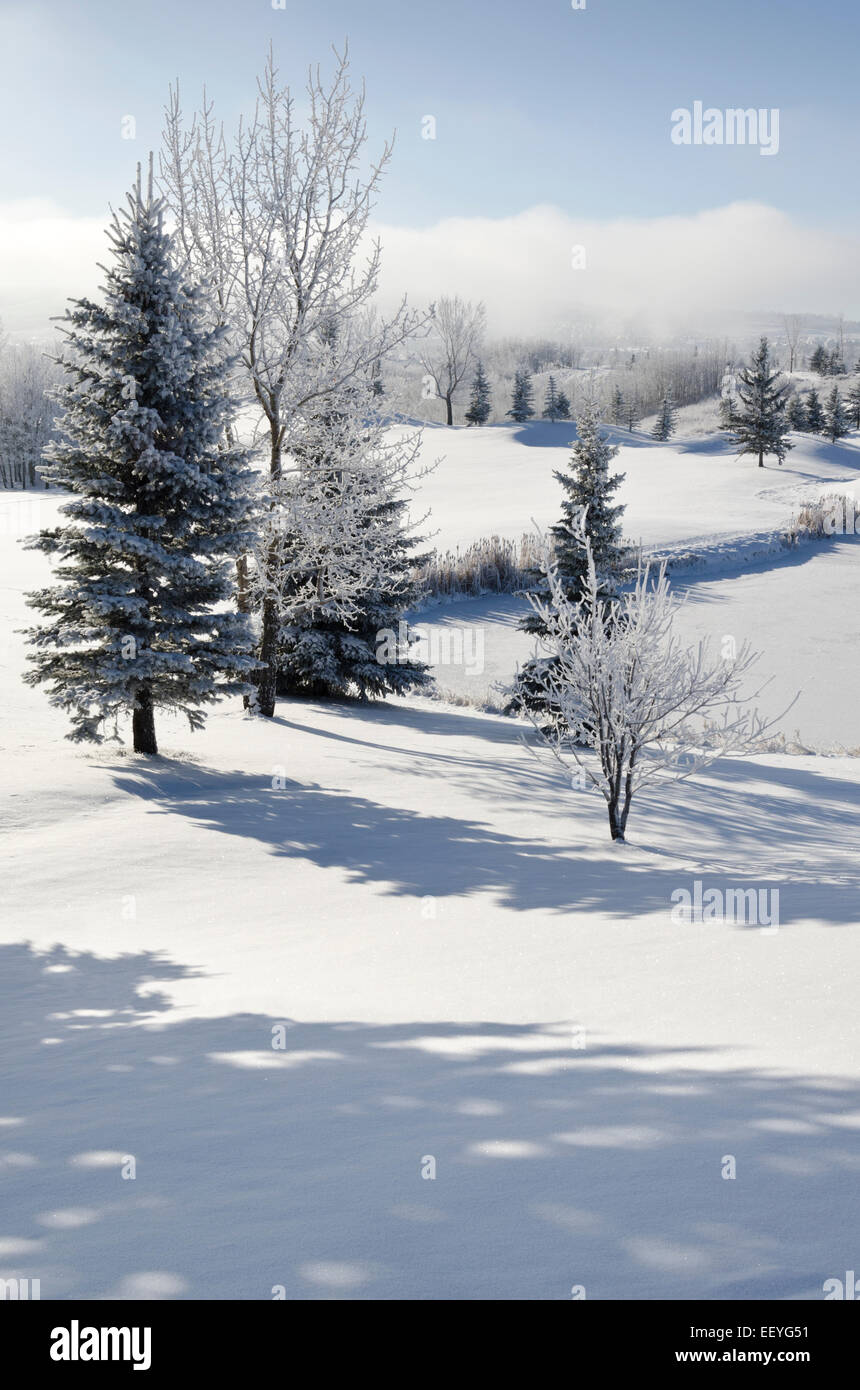 A winter wonderland left behind after an overnight snowfall and freezing fog. Calgary, Alberta, Canada - Stock Image