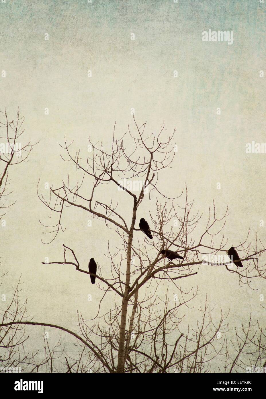Birds perched in a tree during winter. - Stock Image