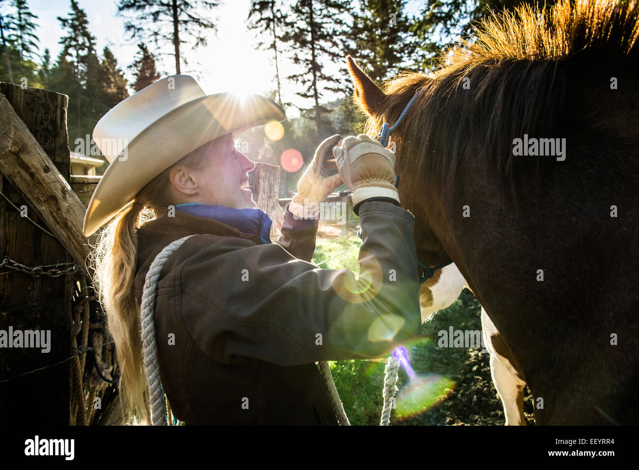 Horse are haltered at the Artemis Acres Guest Ranch near Kalispell, Montana. (Photo by Ami Vitale) - Stock Image