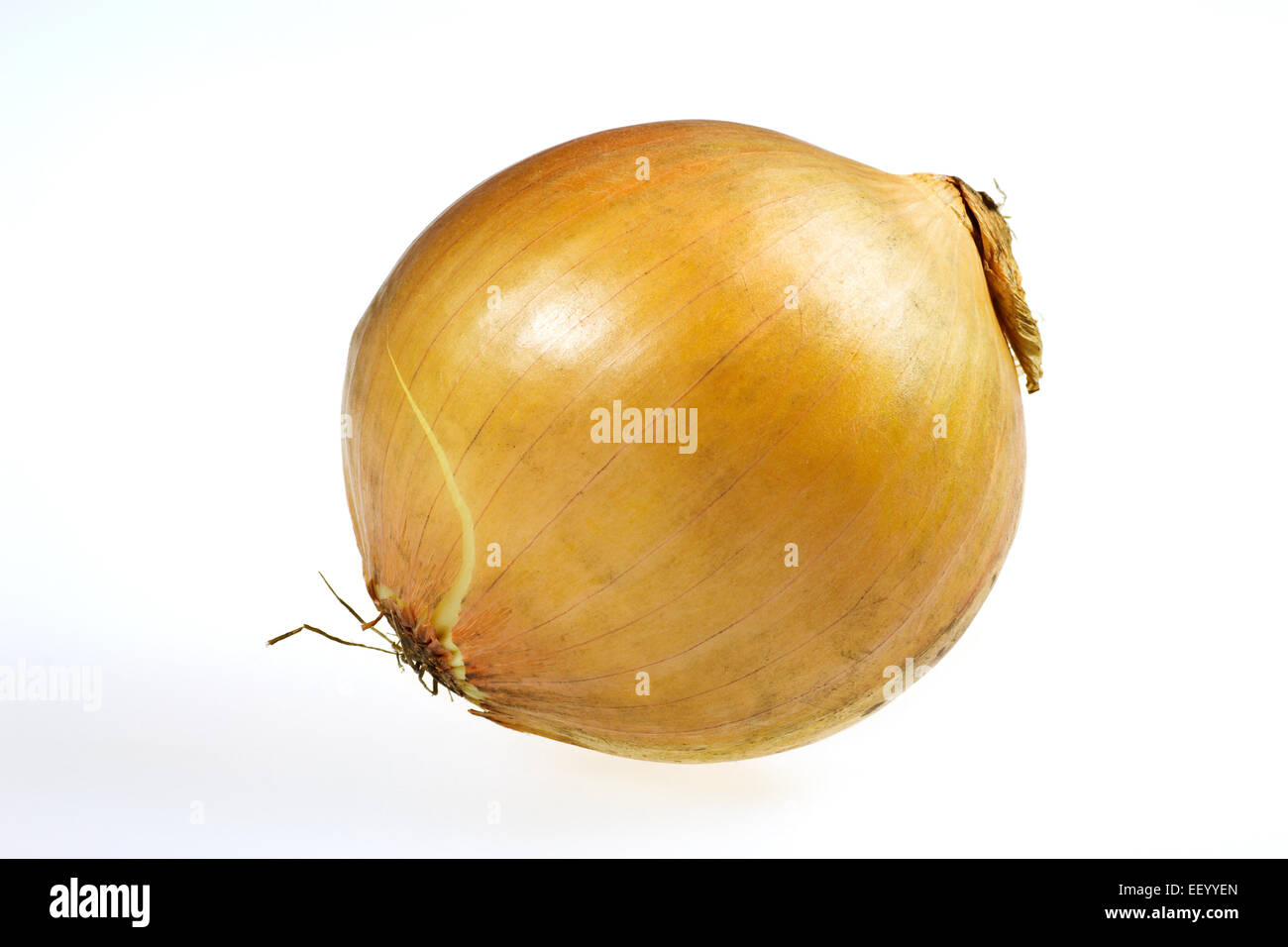 An onion is optional. - Stock Image