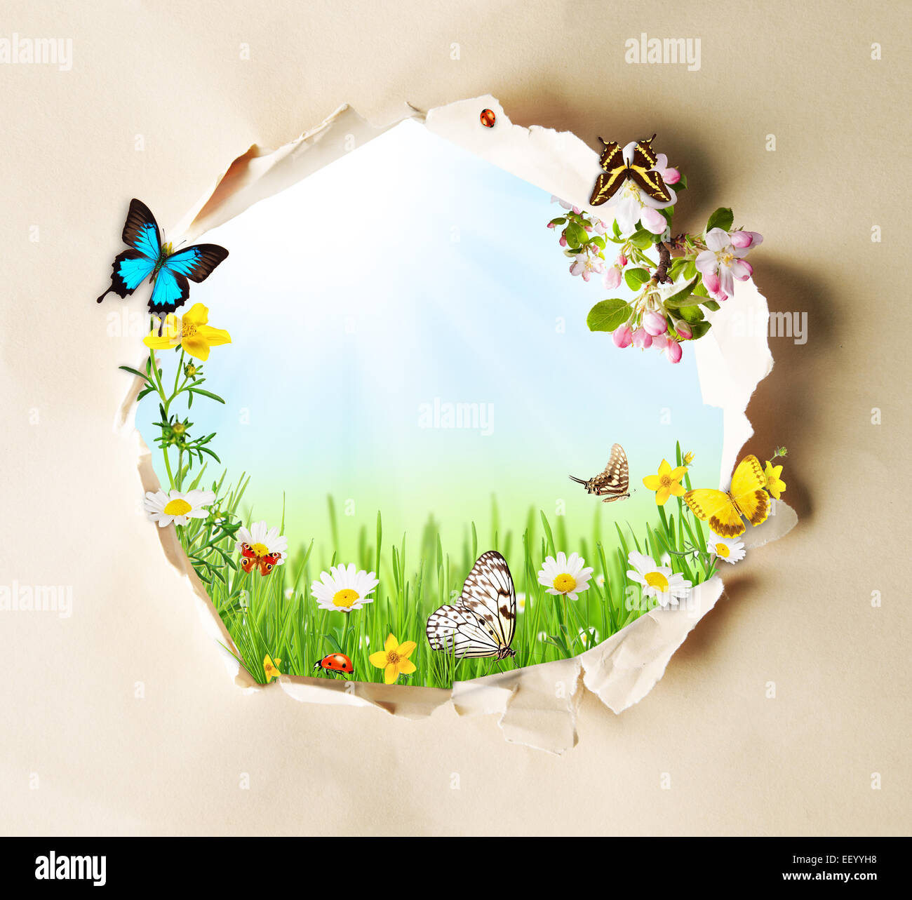 Conceptual spring theme with gappy paper and spring meadow with butterflies and blooming chamomiles Stock Photo