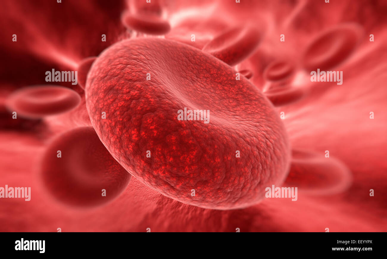 Blood cell  in focus - Stock Image