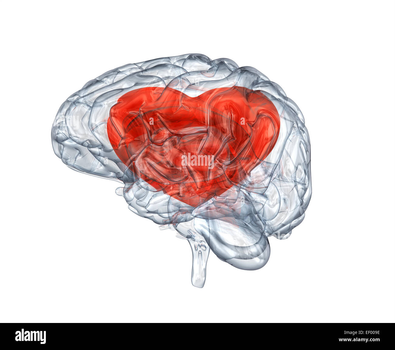 Glass human brain with heart within. Clipping path included - Stock Image