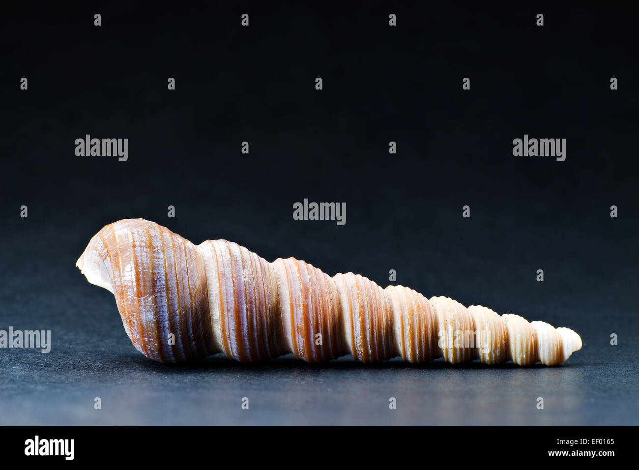 A worm housing. Stock Photo