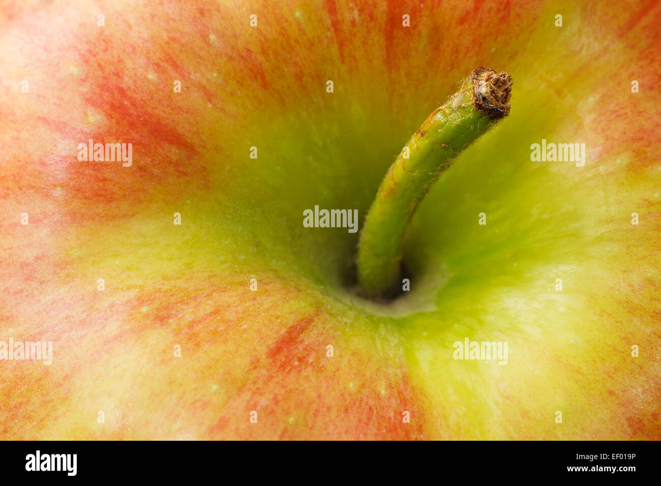 Detail of an apple. - Stock Image