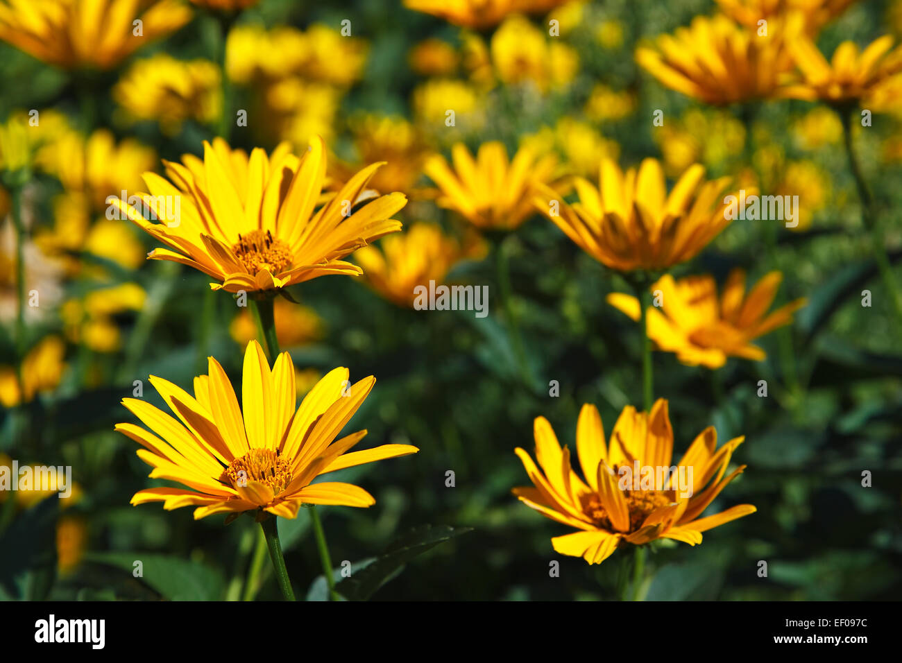 Flowers - Stock Image