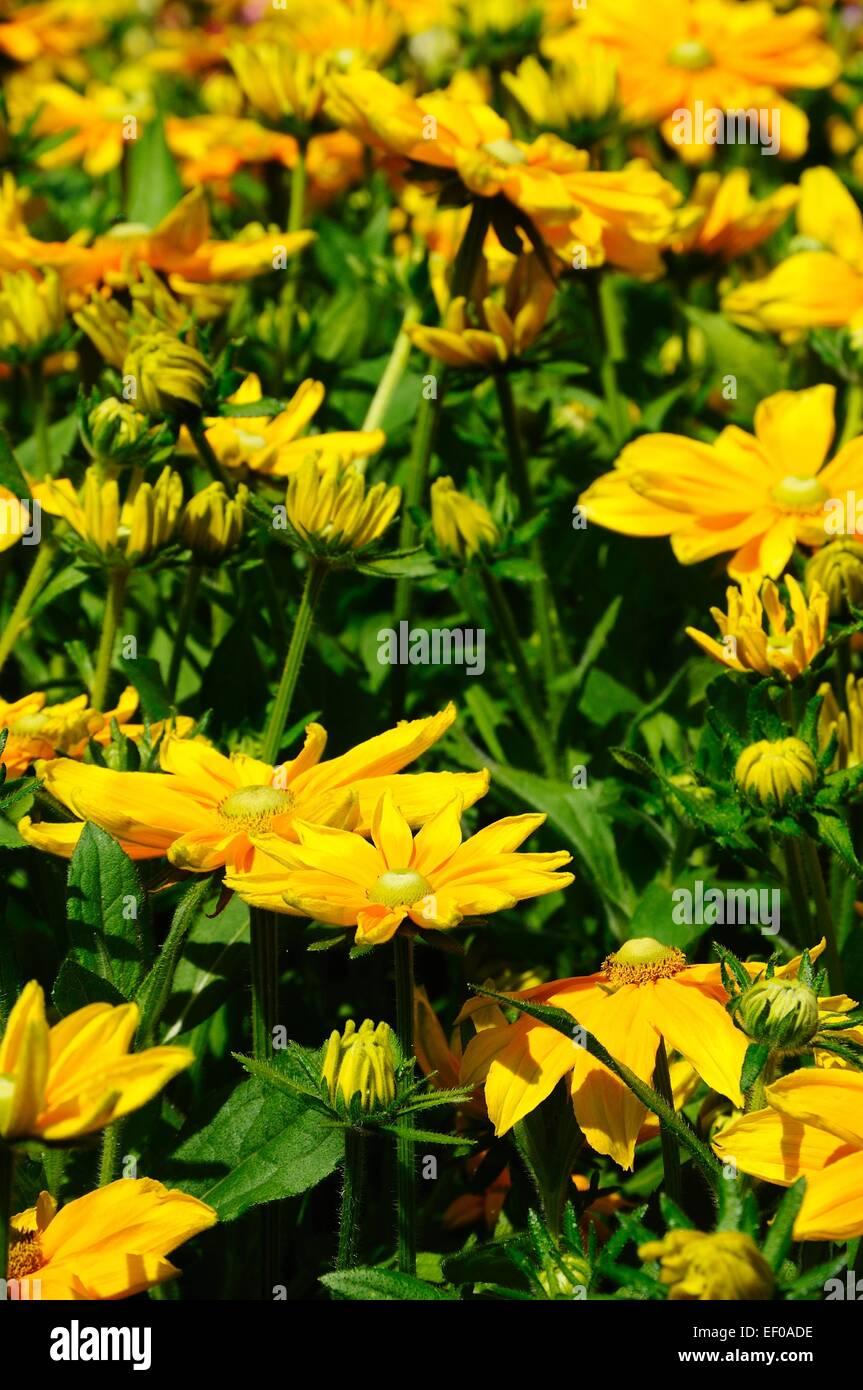 Pretty Yellow Flowers Stock Photo 78069530 Alamy