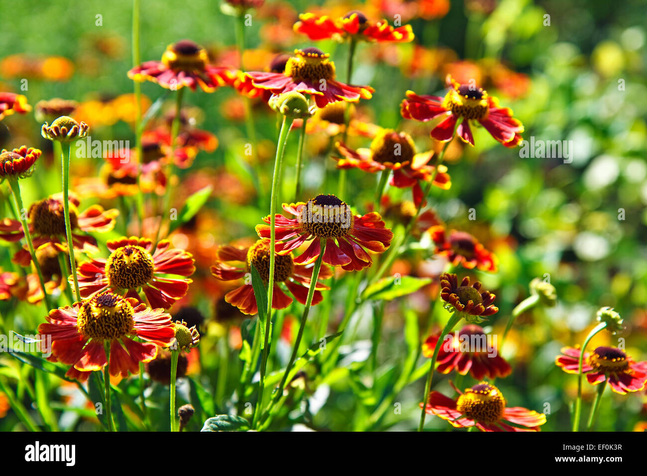 Blooming flowers. - Stock Image