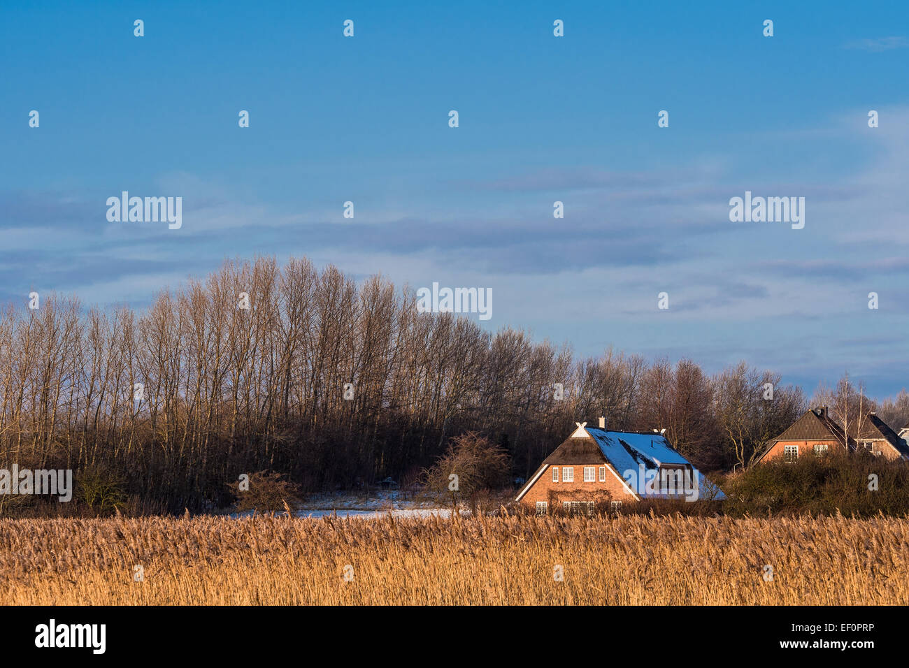 Landscape on shore of the Baltic Sea in Germany. - Stock Image