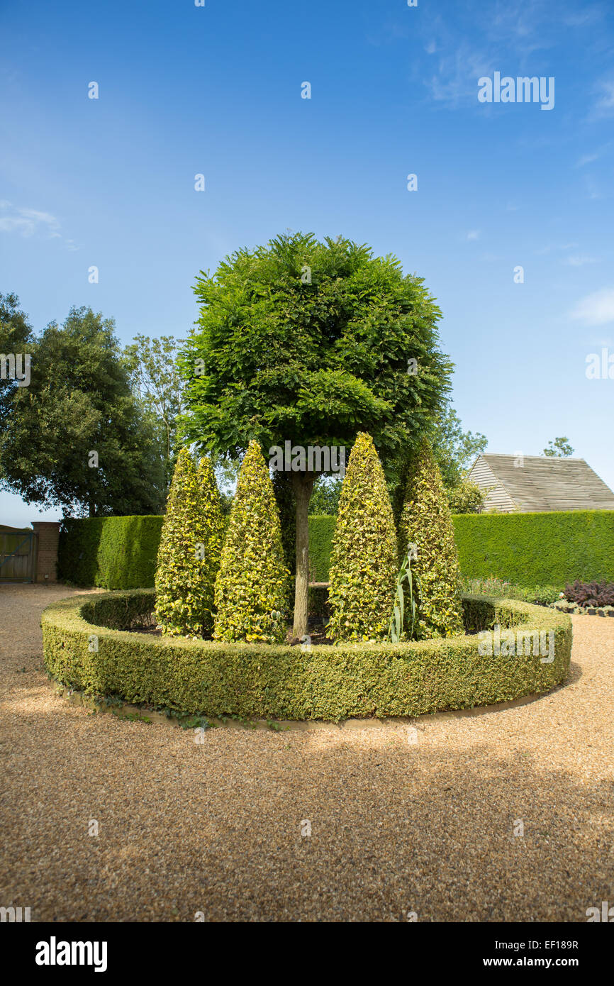 Topiary at East Ruston Old Vicarage Gardens, Norfolk - Stock Image