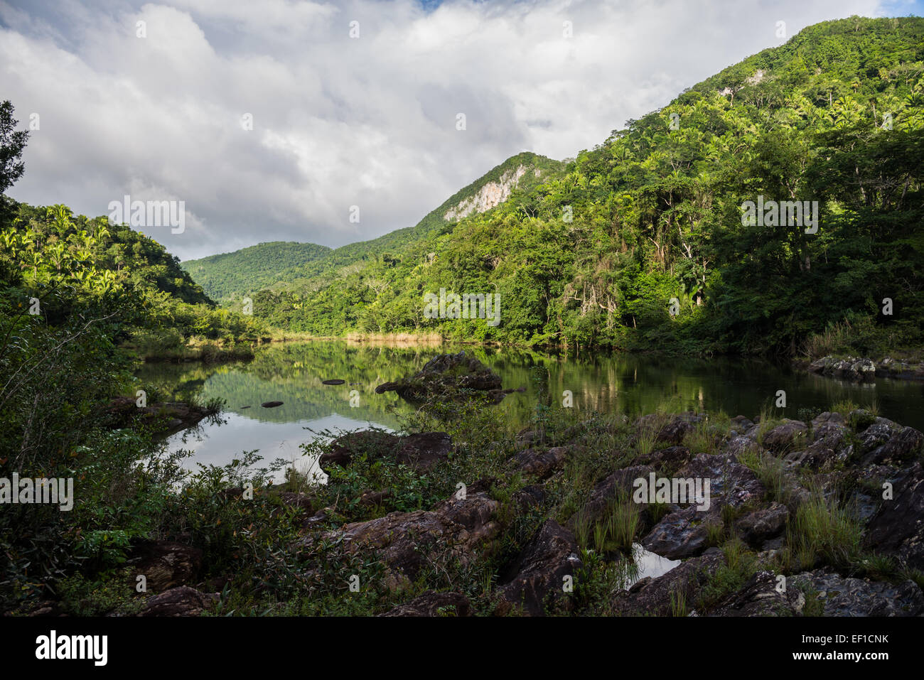 The Macal River running through lush jungles of Belize, Central America. - Stock Image