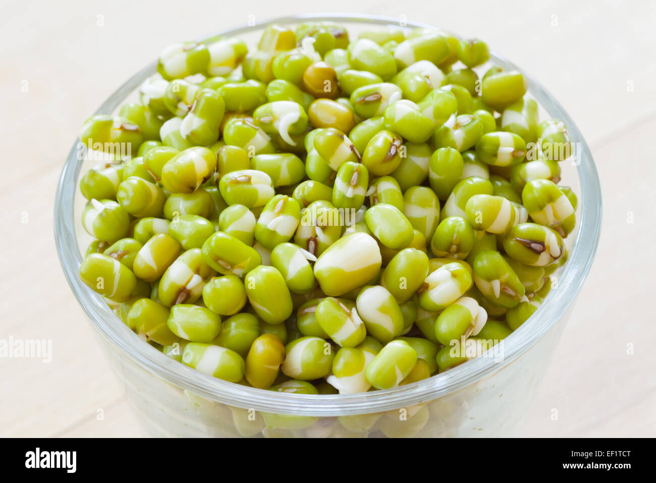 green mung bean sprouts in bowl - Stock Image