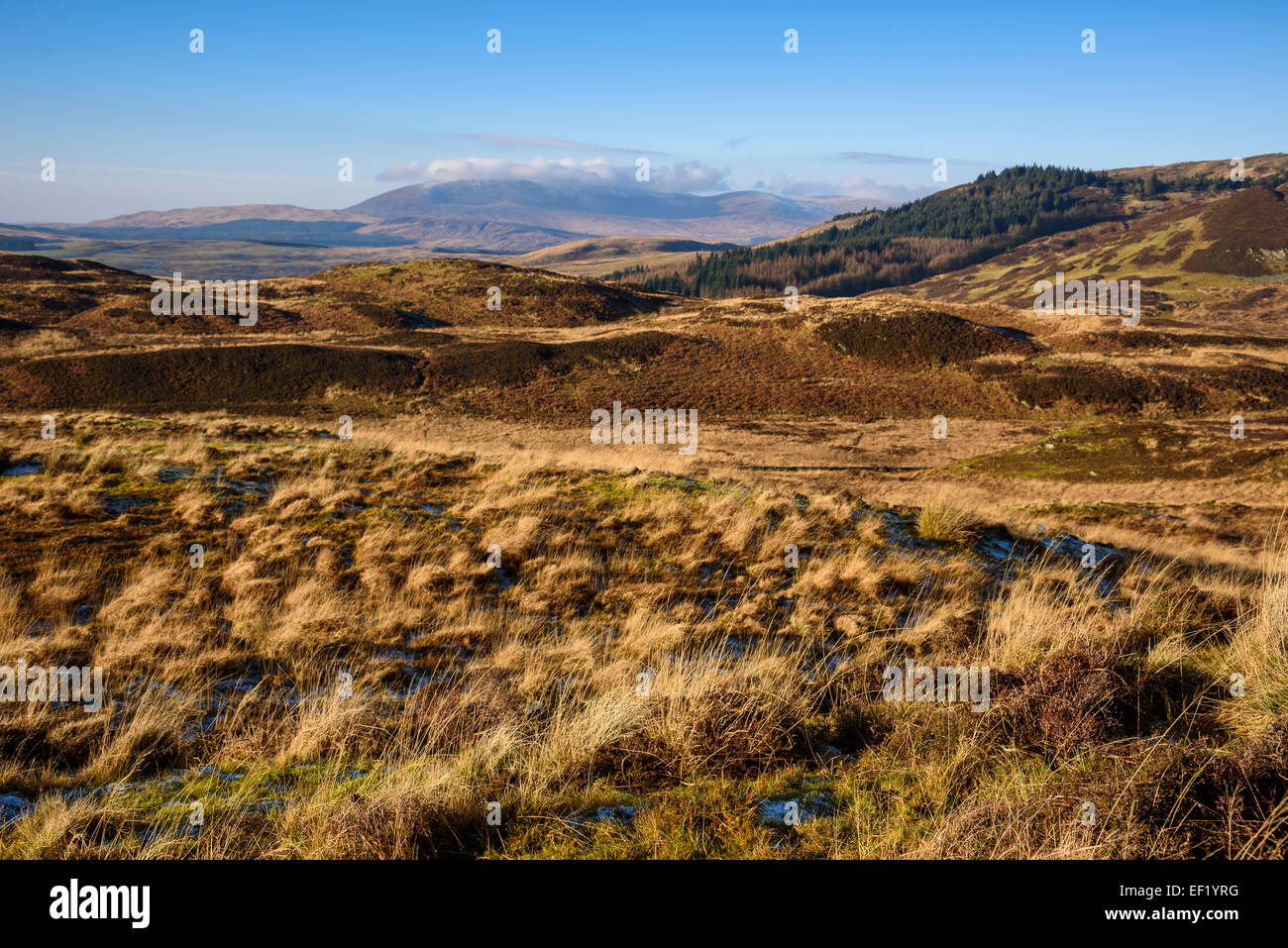 View looking towards Cairnsmore of Fleet from Fell of Laghead, Gatehouse of Fleet, Dumfries & Galloway, Scotland - Stock Image
