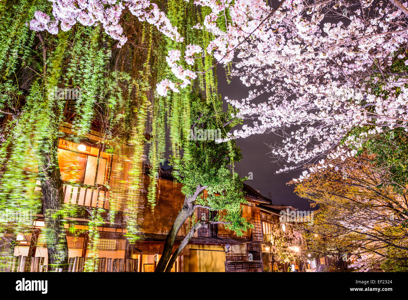 Spring foliage in Kyoto, Japan at night. - Stock Image