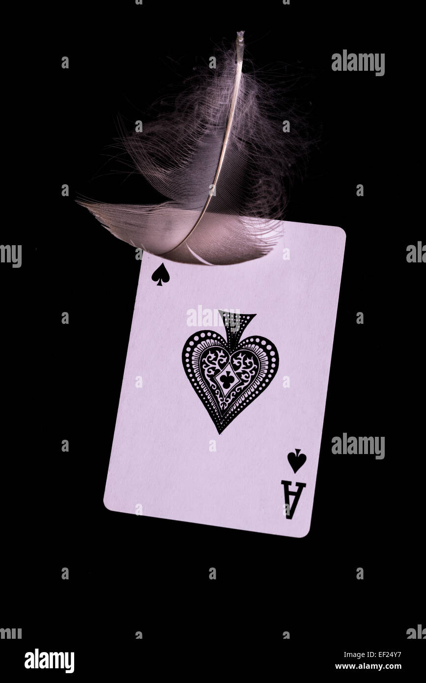 Ace of spades and feather - Stock Image