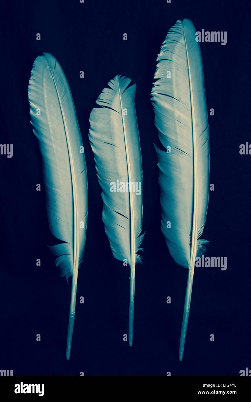 Three feathers on black background - Stock Image