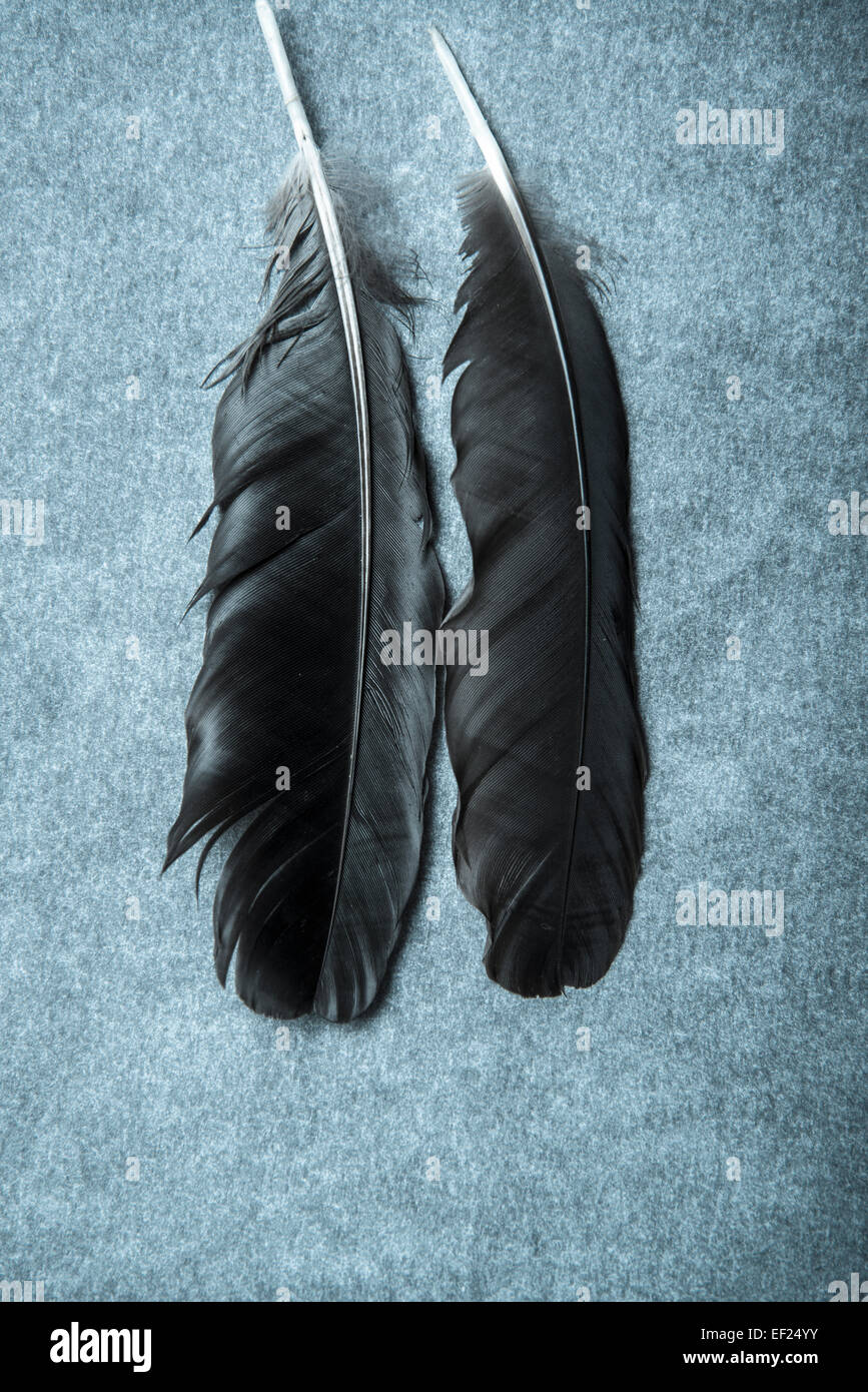Two dark feathers - Stock Image