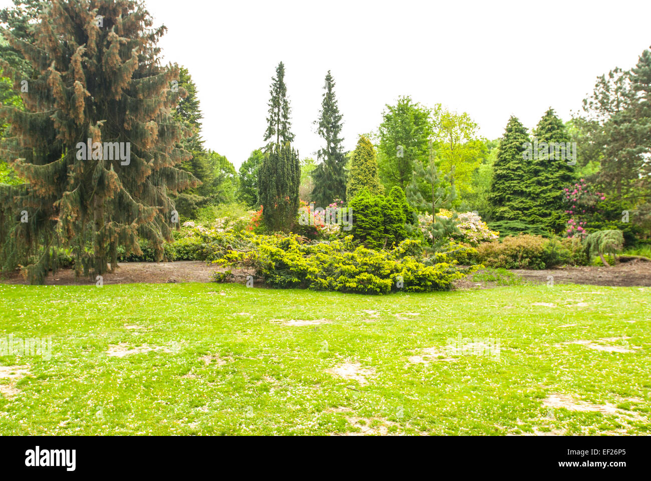 Park scene with lawn trees and bushes - Stock Image