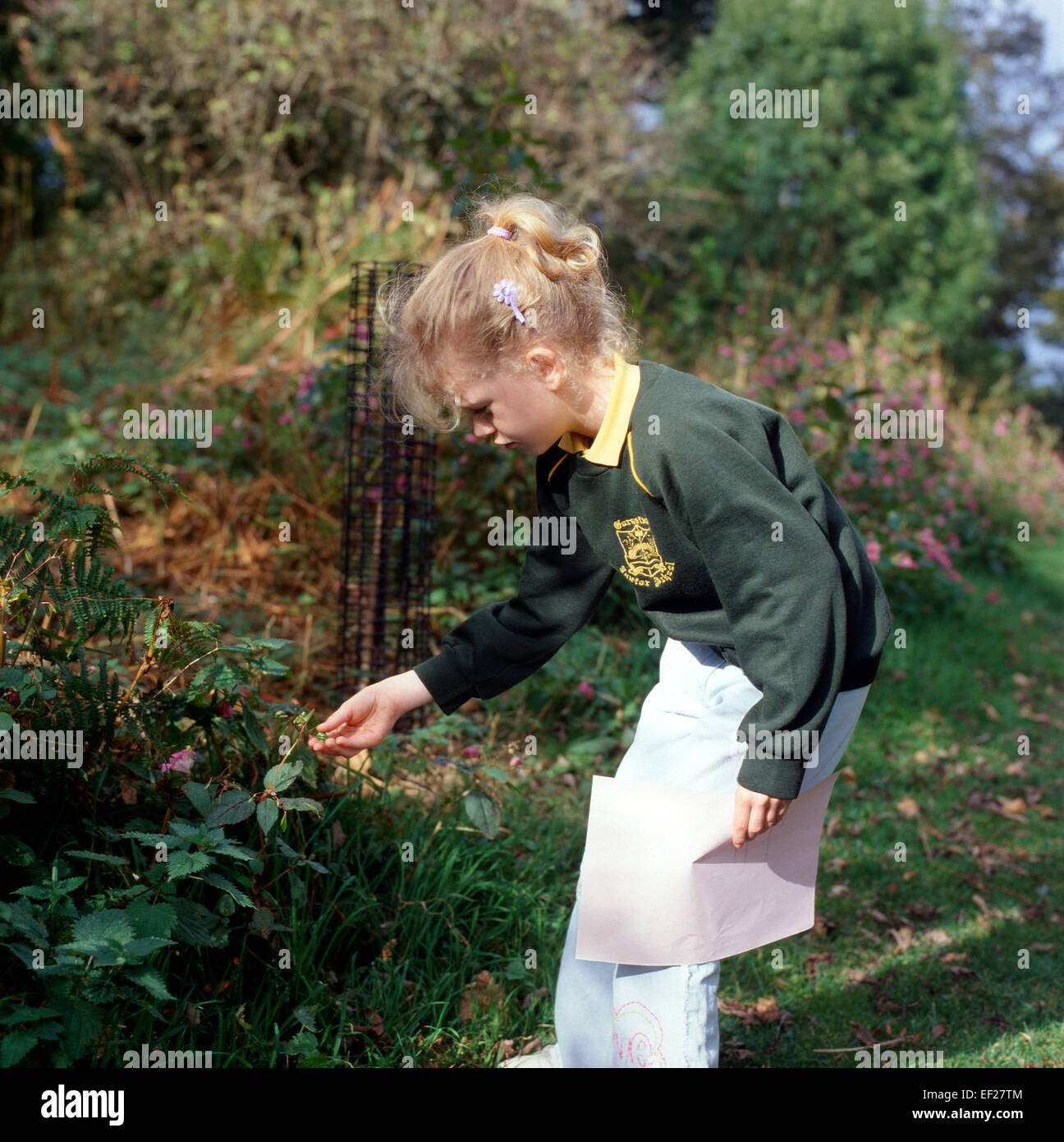 Student girl looking at Himalayan Balsam seed pod on a school trip in autumn to Gelli Aur Country Park Llandeilo - Stock Image