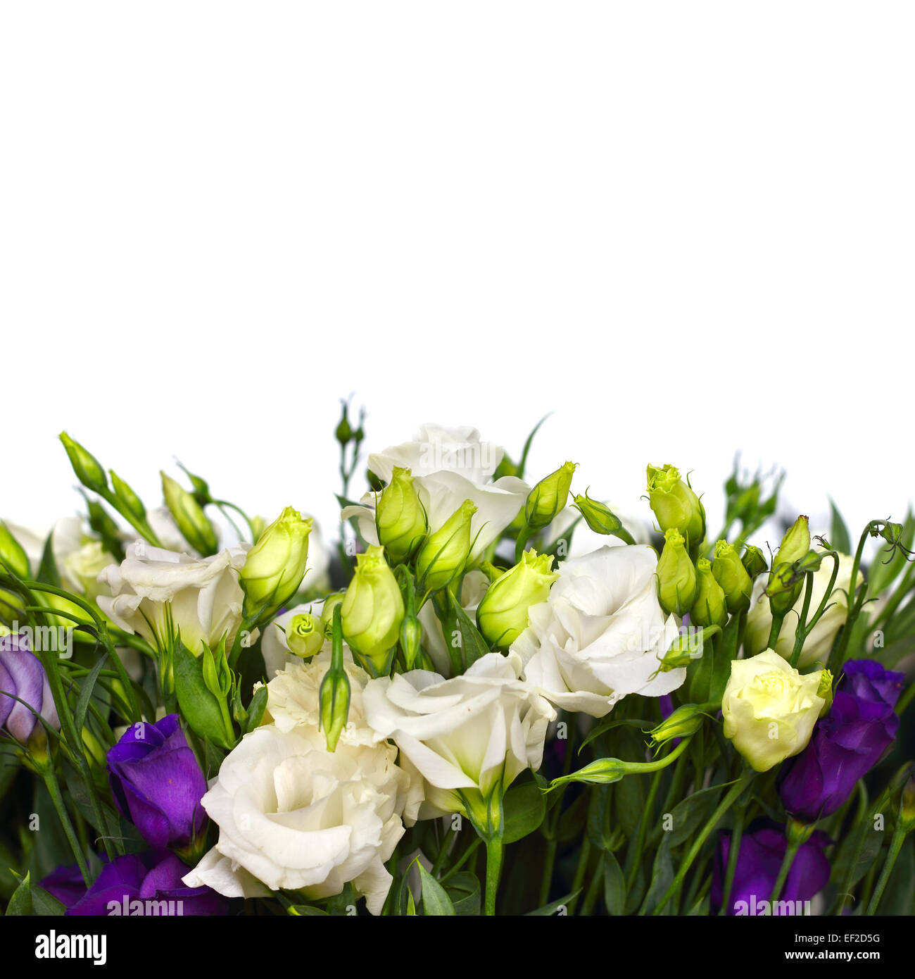Bouquet of white and violet lisianthus flowers on white stock photo bouquet of white and violet lisianthus flowers on white altavistaventures Choice Image