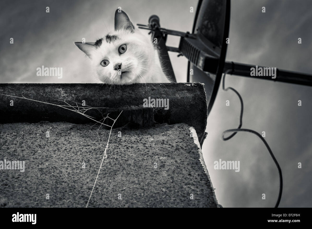 A gritty image of a cat on a roof looking down on the viewer - Stock Image