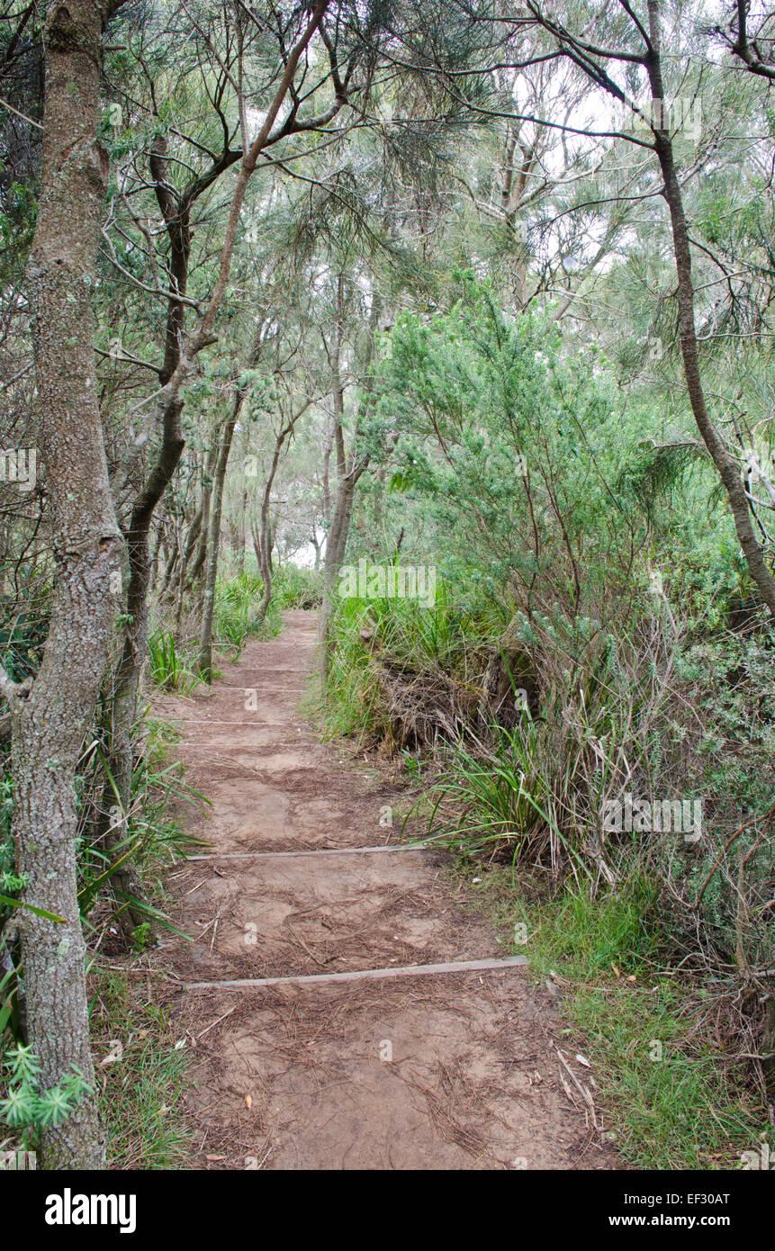 Bicentennial Coastal Walkway, Narrabeen NSW Australia. - Stock Image