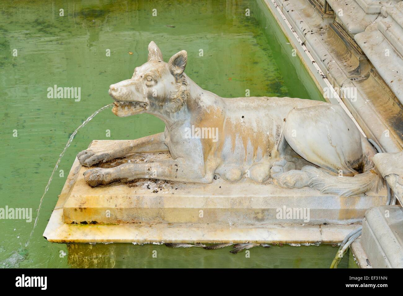 She-wolf spouting water in the Fonte Gaia fountain, Piazza del Campo, Siena, Province of Siena, Tuscany, Italy - Stock Image