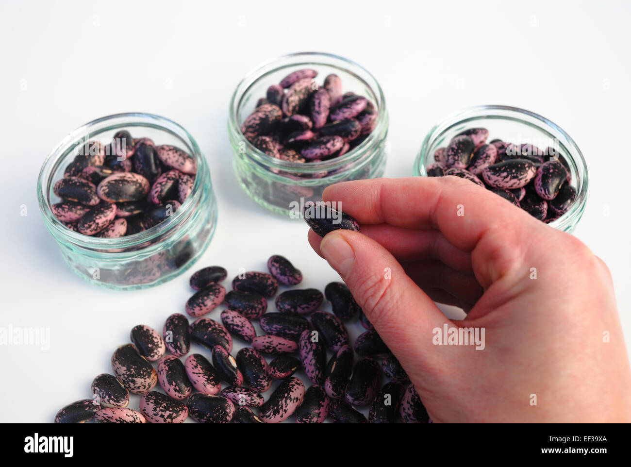 Man counting beans in to three pots. - Stock Image