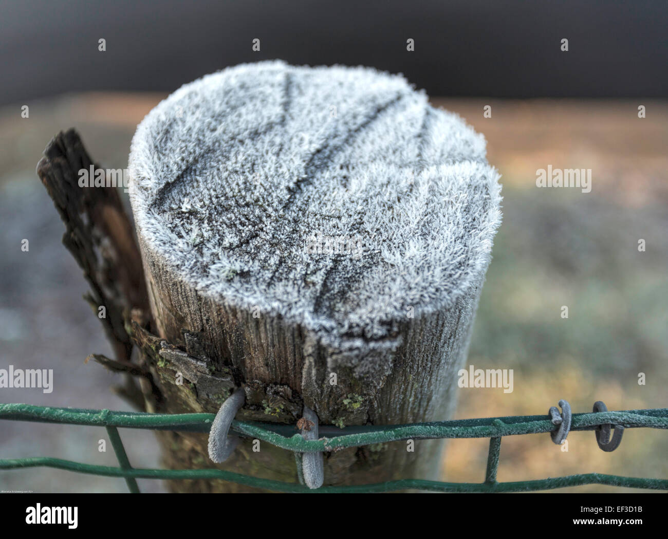 Katwijk aan Zee, South Holland, The Netherlands: Wooden pole covered by hoarforst on a Dutch winter morning. - Stock Image