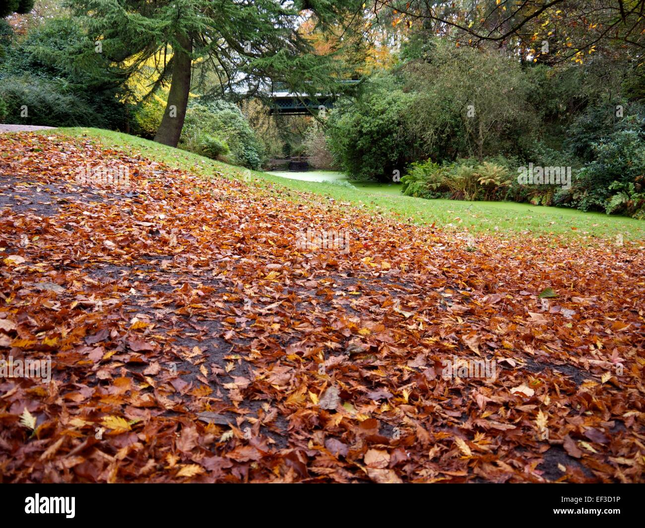 autumn leaves on the ground and woods and a bridge in the background