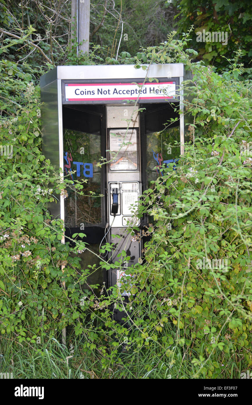 Telephone kiosk surrounded by overgrown branches, Hook Norton, Oxfordshire - Stock Image