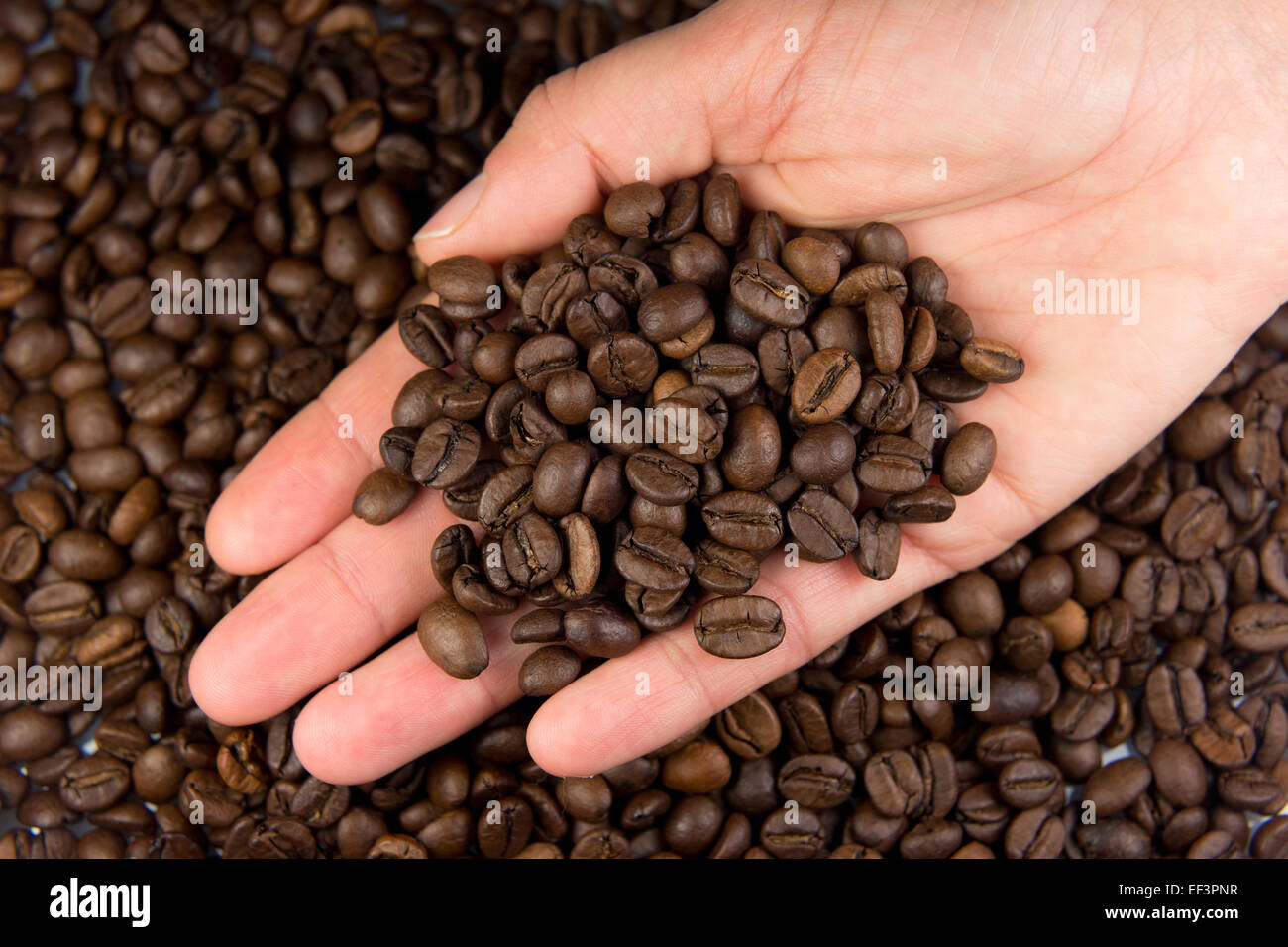 A hand holding a pile of coffee beans. Stock Photo