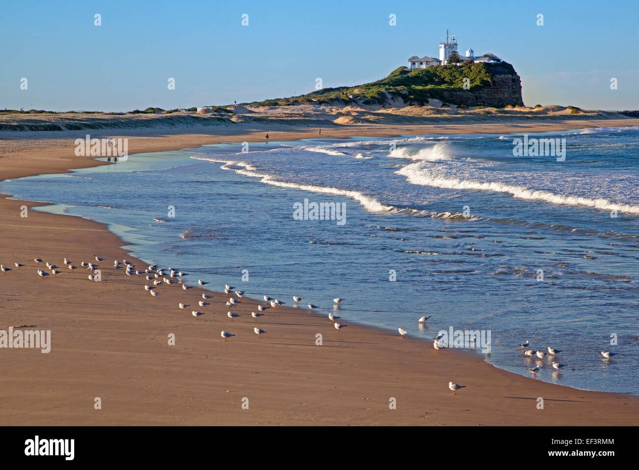 Nobby's Lighthouse and seagulls on the beach at Newcastle, New South Wales, Australia - Stock Image