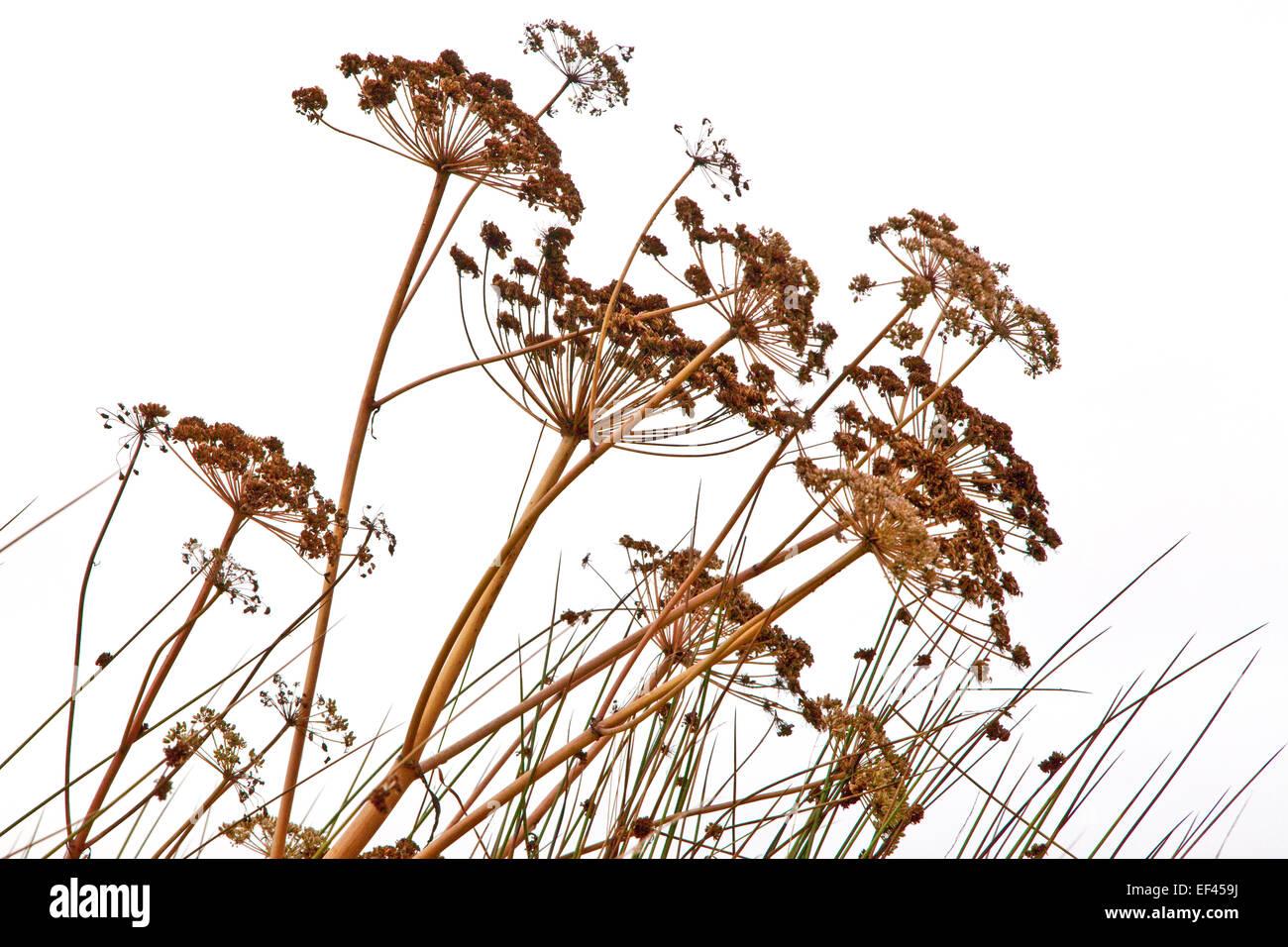 Autumnal Wild Plants - Stock Image
