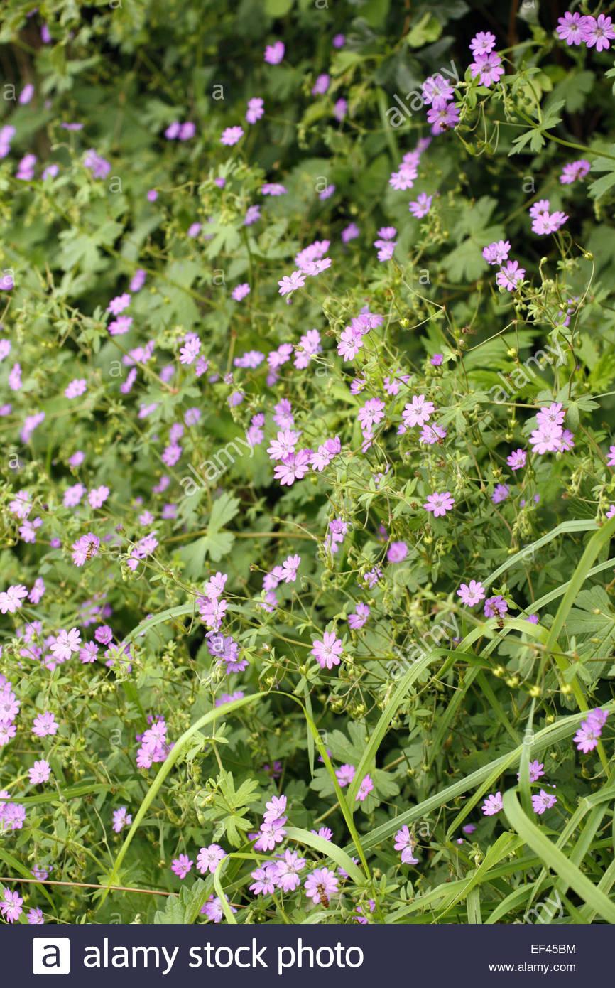 Wild Flower Wildflower Summer Europe European British Native Meadow
