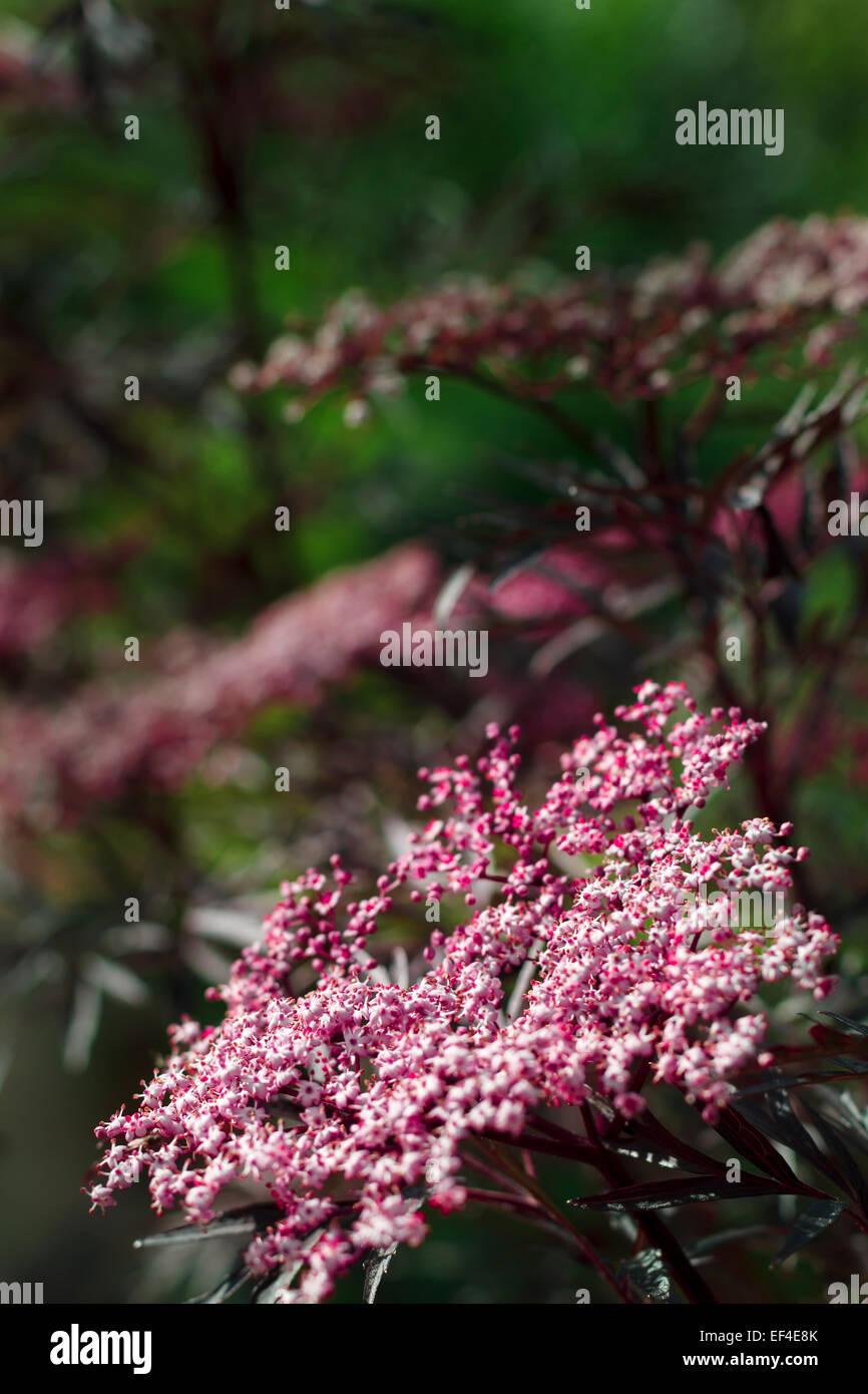 plant flower wildflower botany - Stock Image