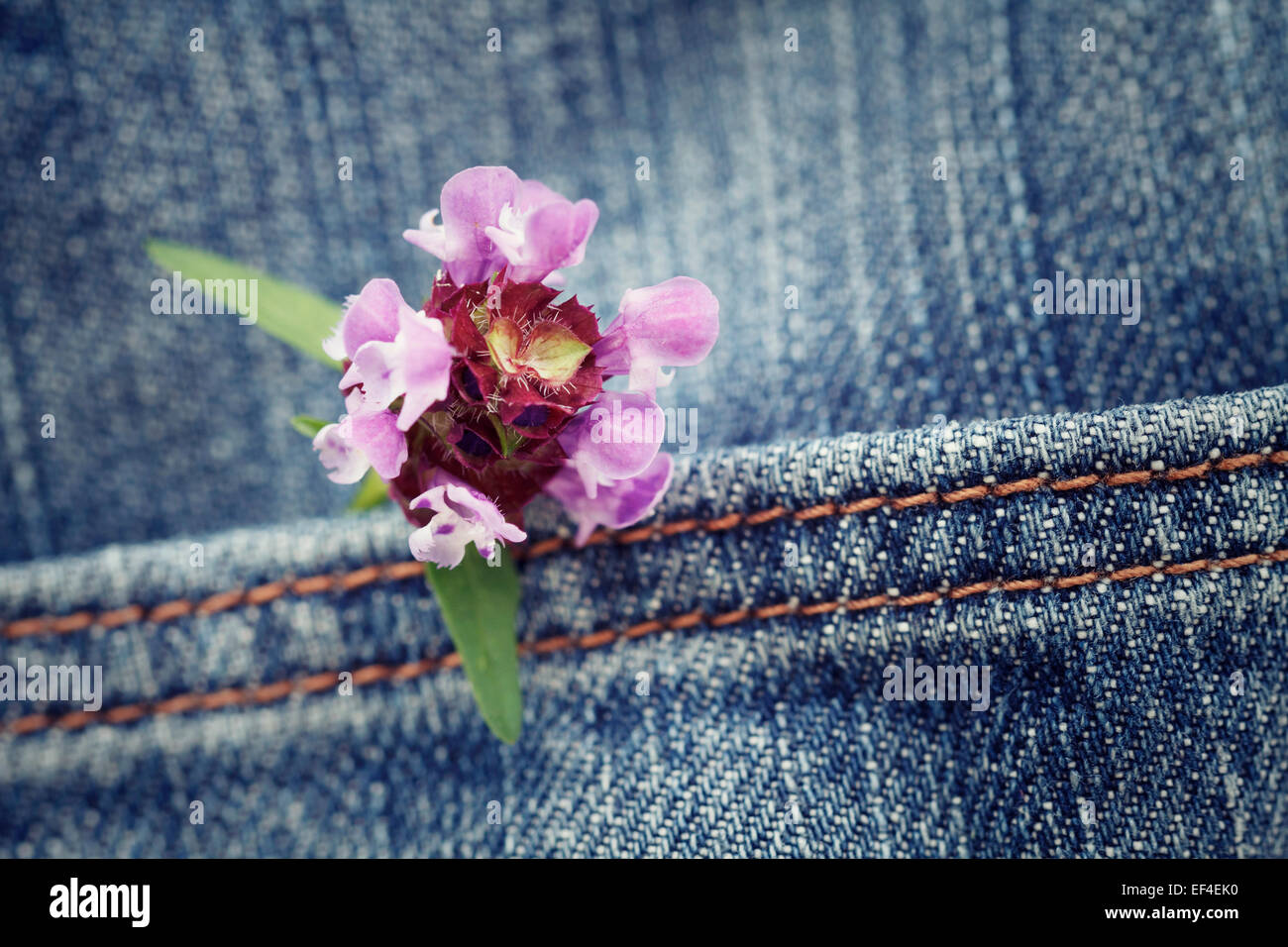 concept, flower in a pocket of jean trousers - Stock Image