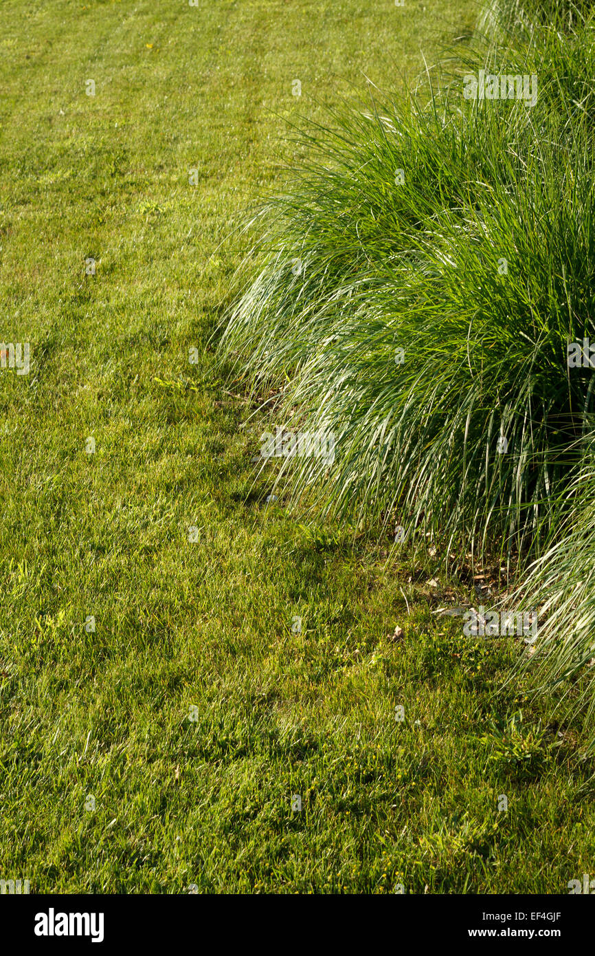 grass lawn - Stock Image