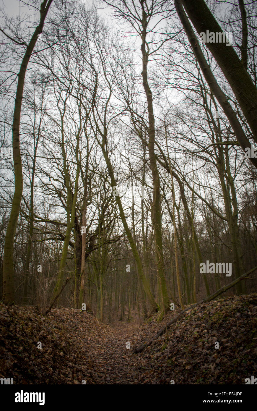 Woodland Scene,Saxony-Anhalt,Germany. - Stock Image