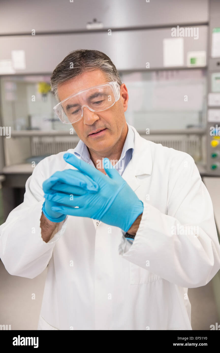 Senior pharmacist putting on his gloves - Stock Image