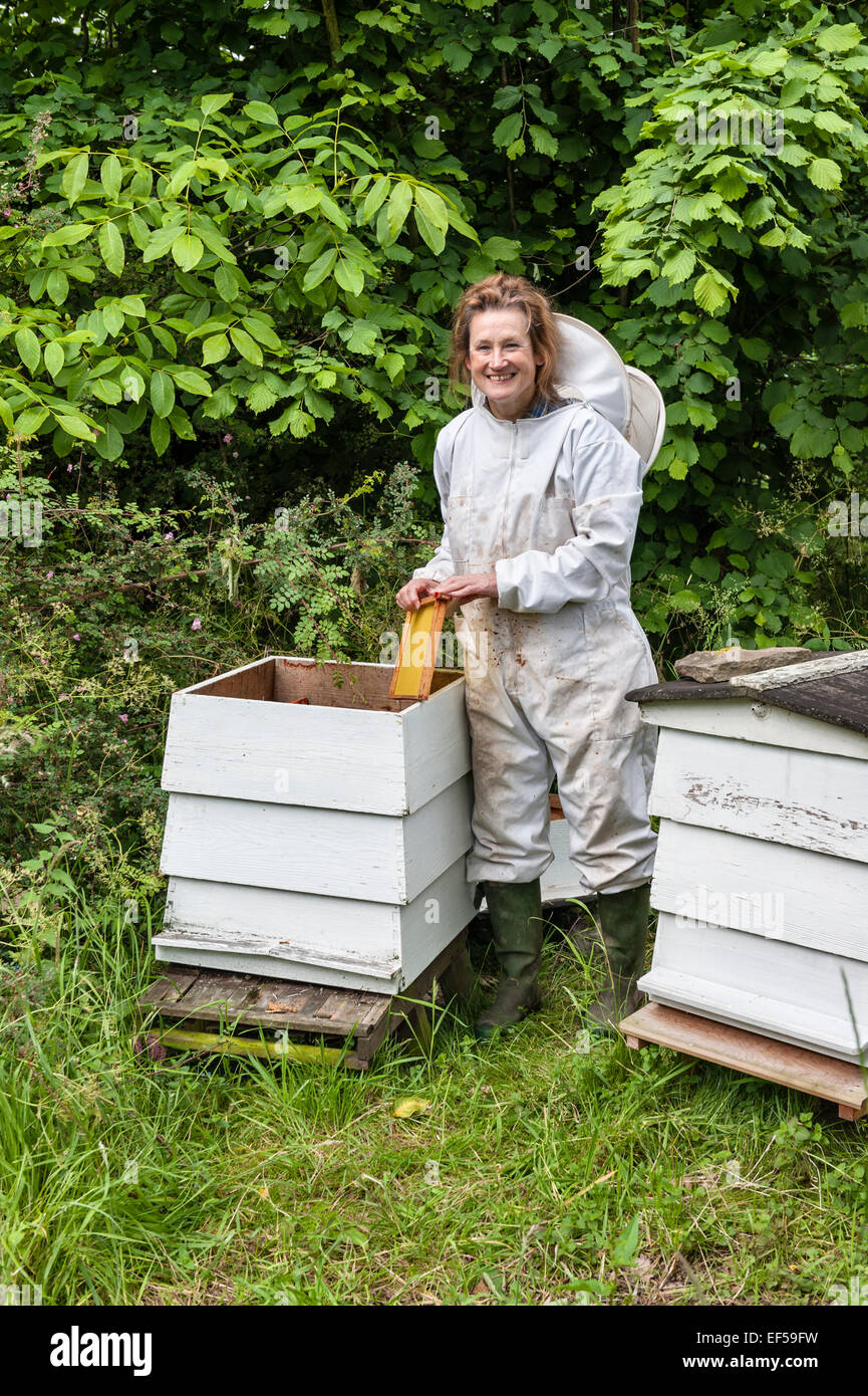 Dr. Katherine Swift, author of The Morville Hours, attending her beehives in her garden - Stock Image
