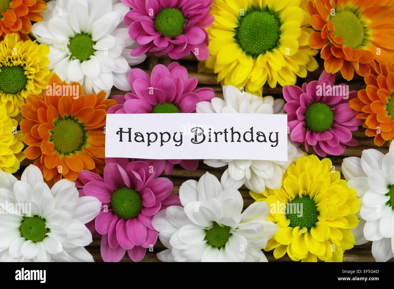 Happy birthday card with colorful santini flowers stock photo happy birthday card with colorful santini flowers izmirmasajfo